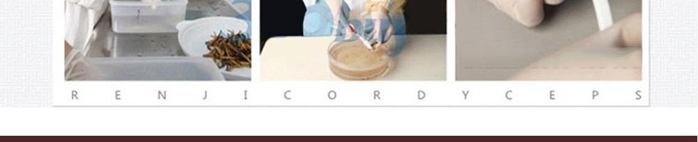 con đông trùng hạ thảo tây tạng
