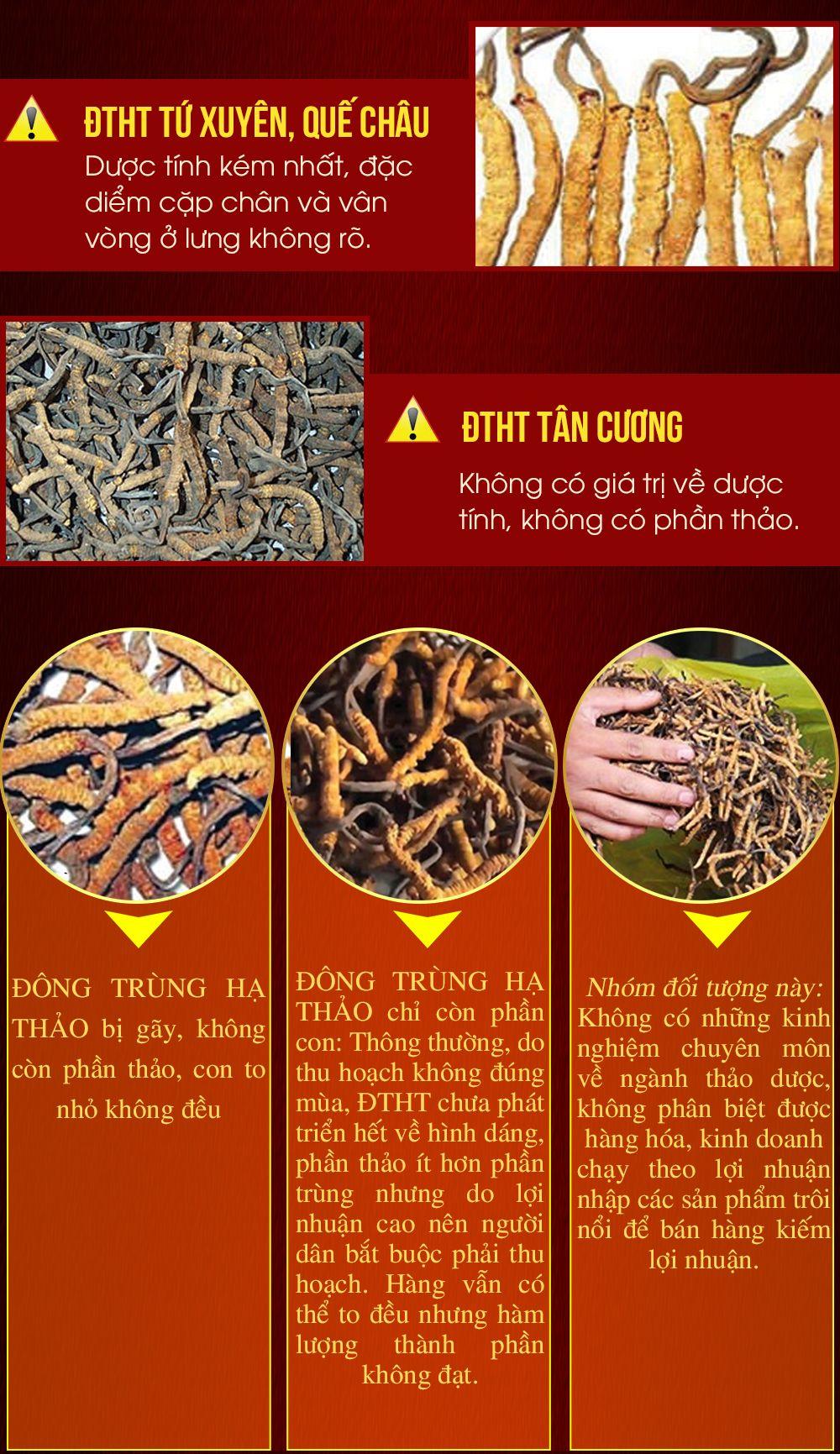 Đông trùng hạ thảo nguyên con cao cấp