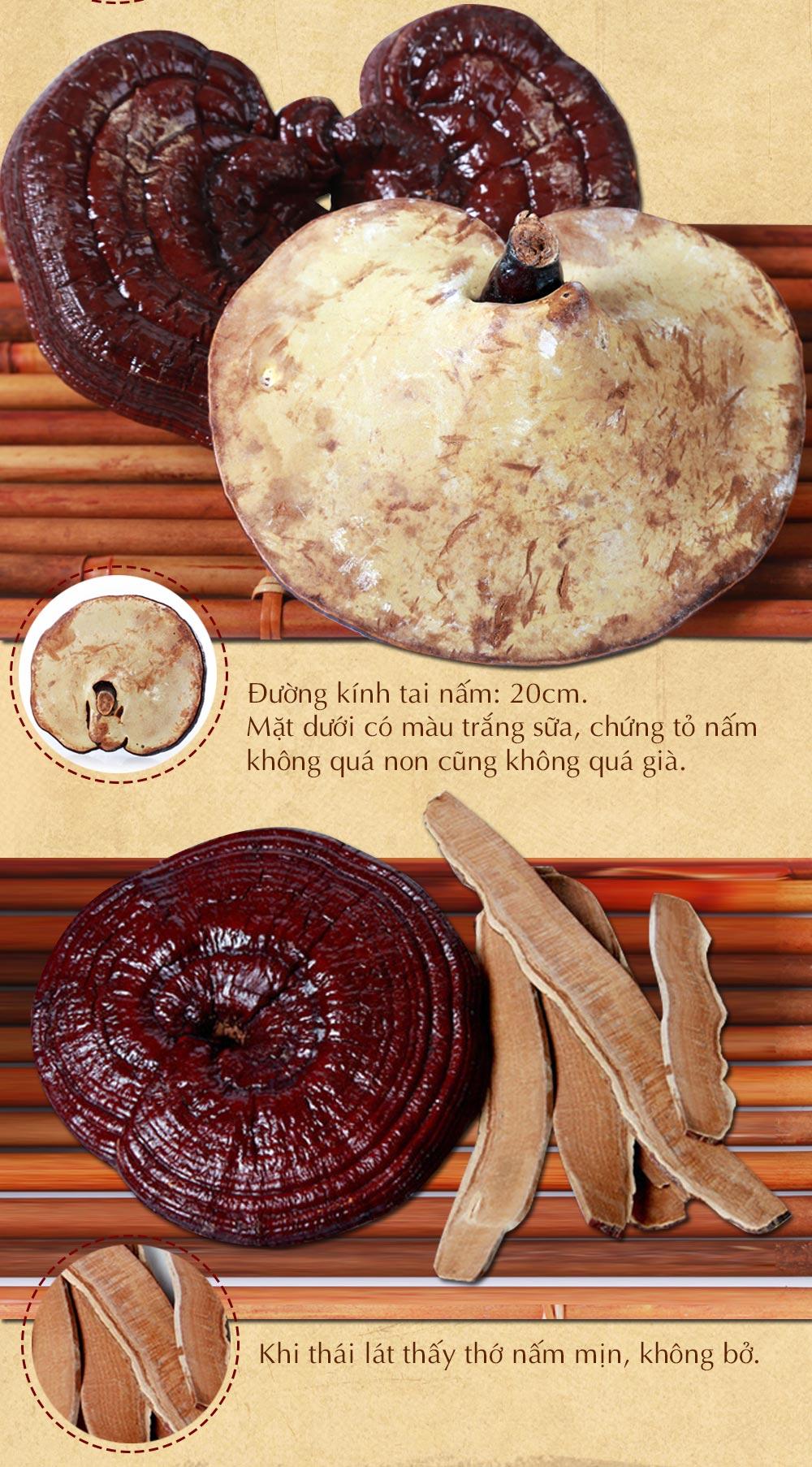 Nấm linh chi đỏ thượng hạng Hàn Quốc L048