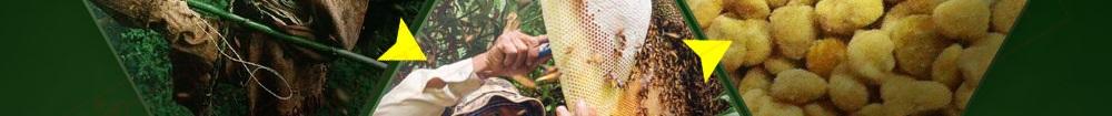 Địa chỉ bán phấn hoa rừng núi tại hà nội, tp hcm