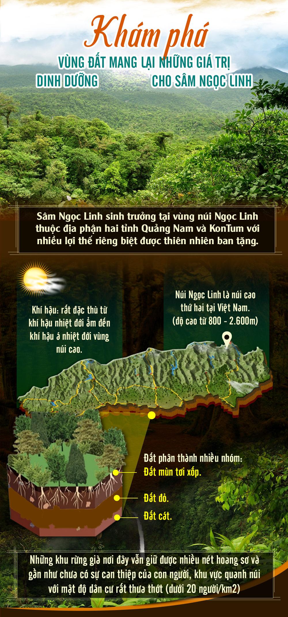 Củ sâm ngọc linh núi tự nhiên