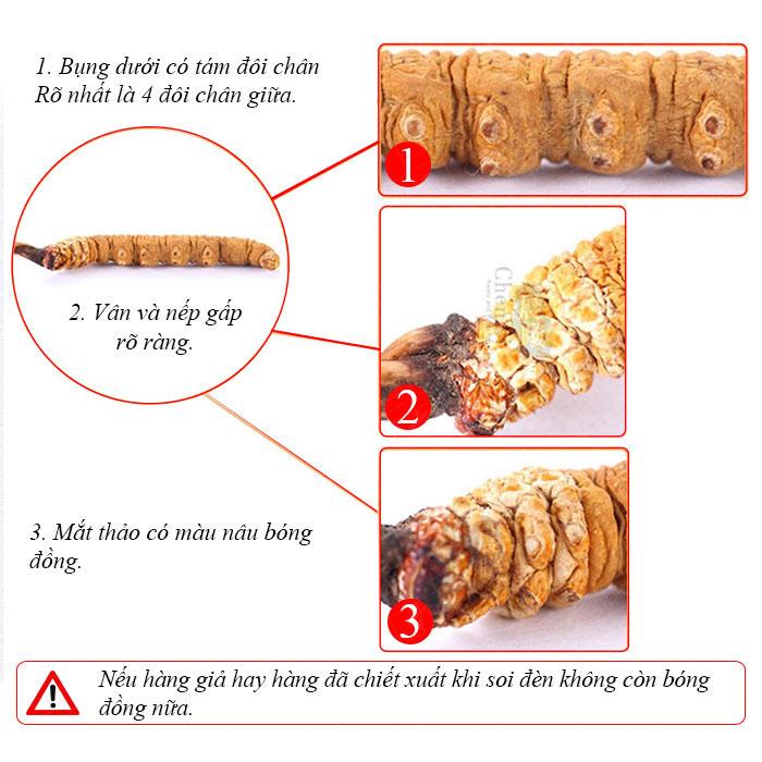 Đông trùng hạ thảo loại đặc biệt loại 10gr