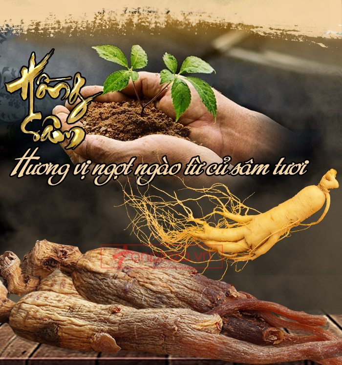 Giới thiệu cây nhân sâm cây thuốc quý của nhân loại
