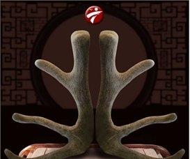 Lộc nhung hươu tươi Altai non mềm chất lượng cao NH010
