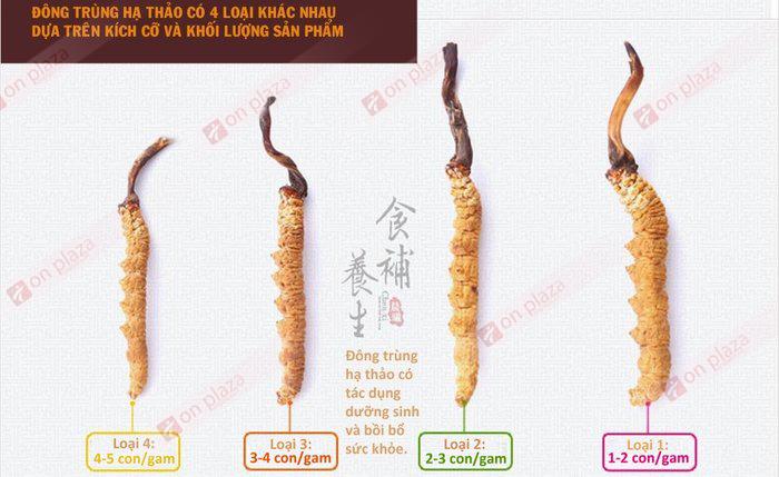 Các loại đông trùng hạ thảo đang được bán tại công ty