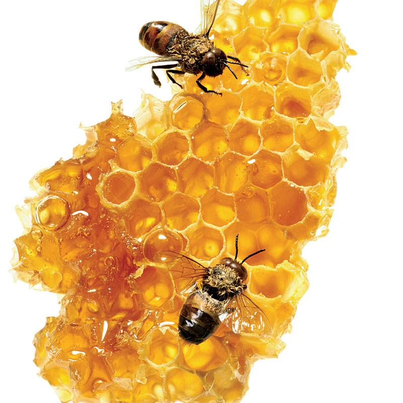 Mật ong nguyên chất từ thiên nhiên