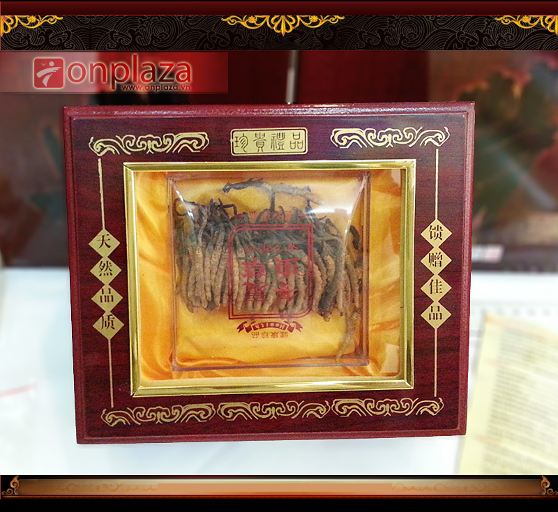 Đông trùng hạ thảo nguyên con hộp gỗ 20g Tây Tạng